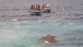 Acht Kilometer vor Sri Lankas Küste: Marine rettet Elefanten aus Seenot