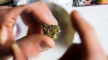 Historischer Tag in Uruguay: Staatlicher Verkauf von Marihuana beginnt