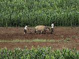 Spenden für Bedürftige nötig: Nahrung in Nordkorea wird nach Dürre knapp