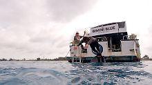Wettkampf als Simulation: Weißer Hai schwimmt Phelps davon