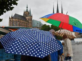 Ergiebiger Dauerregen: Touristen mit Regenschirmen auf dem Domplatz in Erfurt.