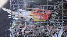 In Lagerhalle in Kalifornien: Polizei findet 2000 verlassene Tiere
