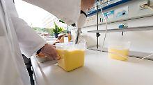 Arbeit unter Hochdruck im Labor: Wie Eier auf Fipronil getestet werden