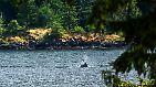 Und mit viel Glück kann man in der Bucht sogar einen Orca erblicken. Genau hinschauen oder Fernglas mitbringen lohnt sich also.