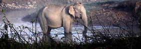 Der Tag: Indiens Behörden jagen mörderischen Elefanten