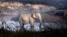 Einfuhr aus Sambia und Simbabwe: Trump legalisiert Elefanten-Trophäen