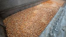 Verseuchte Eier in 17 Ländern: Fipronil-Skandal erreicht Asien