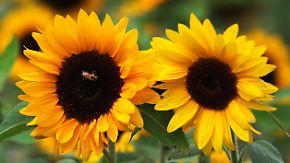 Sonne satt im Süden: Es wird wieder wärmer