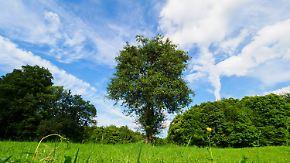 Blauer Himmel und Sonnenschein: Ein Sommertag für alle