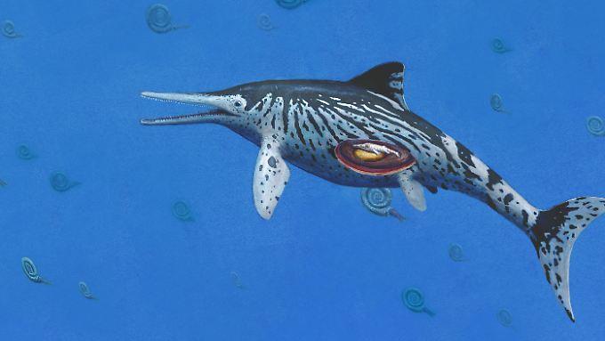 Der schwangere Ichthyosaurus.