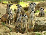 Geldsegen aus den USA: Kölner Zoo erhält 22-Millionen-Dollar-Spende