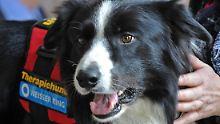 Hunde geben Menschen Ruhe: Tierische Therapeuten brauchen Supervision