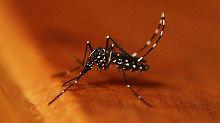 Zugereiste aggressive Variante: Werden wir die Tigermücke wieder los?