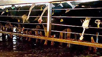 """Weißes Gold: """"Das System Milch"""" wirft Blick hinter die Kulissen der Milliardenindustrie"""
