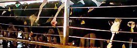 """""""Das System Milch"""": Doku wirft Blick hinter die Kulissen einer Milliardenindustrie"""