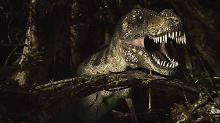 Den heute noch existierenden Verwandten von T. Rex begegnen wir täglich, fast überall.