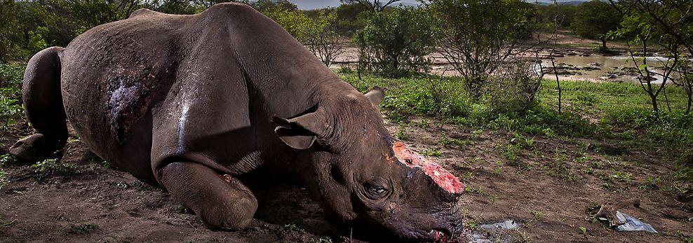 Schönheit und Grausamkeit: Beste Naturfotos des Jahres gekürt