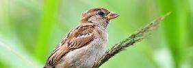 Insektenschwund hat Folgen: Nabu registriert Vogelsterben in Deutschland