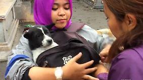 Angst vor Vulkanausbruch auf Bali: Aktivisten retten zurückgelassene Haustiere