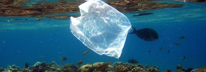 Millionen Mikroteilchen im Meer: Krebse zerstückeln Plastiktüten