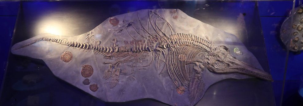 Knochen, Blätter, Fußabdrücke: Fossilien: geheimnisvolle Zeugen der Erdgeschichte