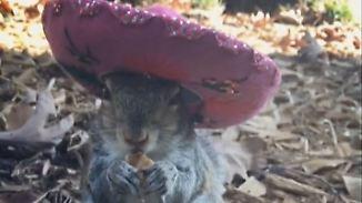 Kaum zu glauben, aber wahr: Gerettetes Eichhörnchen wird treuer Freund