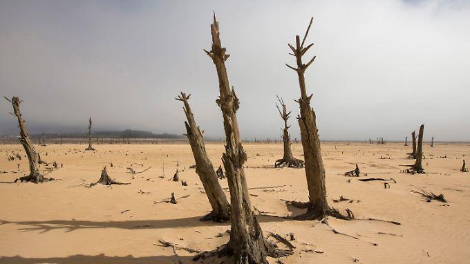 Wasser sucht man im Speichersee Theewaterskloof bei Kapstadt in weiten Teilen vergeblich - dafür findet man abgestorbene Bäume