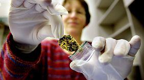 Noch auf Import angewiesen: Cannabis-Boom berauscht deutschen Markt