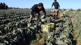 Der Agrarsektor spielt für die tunesische Wirtschaft eine wichtige Rolle.