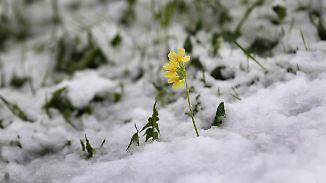 Lawinengefahr auf höchster Stufe: Frühlingshafte Milde schiebt Frost aus dem Land