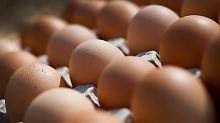 Fünf Supermarktketten betroffen: Eier wegen Salmonellen zurückgerufen