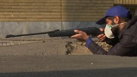 Nagetier-Terror in Teheran: Scharfschützen machen Jagd auf riesige Ratten