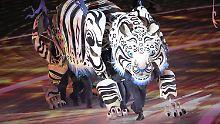 ... Tiger verwandeln die Arena in einen regelrechten Zoo.