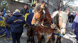 Kutschunfall am Rosenmontagszug in Köln: Rufe nach einem Pferdeverbot beim Karneval werden lauter
