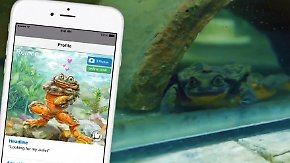 Kaum zu glauben, aber wahr: Frosch kämpft mit Dating-Profil gegen Aussterben