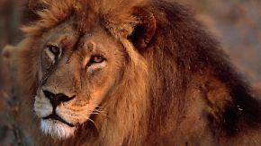 National Geographic: Verrückte Tierwelt - Tierische Tabus