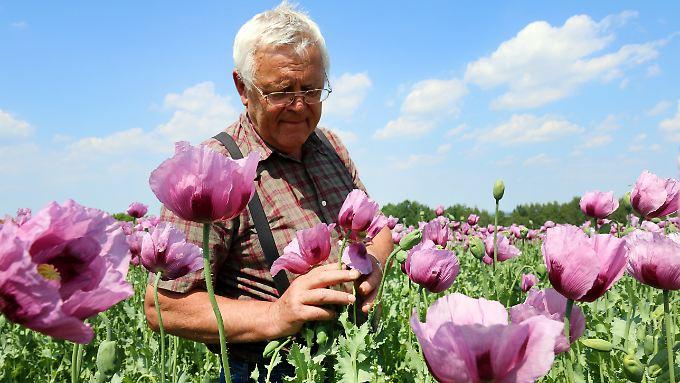 Stephan Stiegler baut in Sachsen auf 130 ha Backmohn an und gehört damit zu Deutschlands größten Mohnproduzenten.