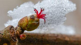 Bitterkaltes Winterwochenende: Ostwind treibt Temperaturen in den Keller