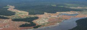 Zerstörung mit Langzeitfolgen: Ökosysteme erholen sich selten vollständig