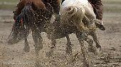 Ein Kind tanzt zur Musik im Staub. Ein reiterloses Pferd rast hinaus auf die Straße. Ein anderes geht später die Ränge hoch, mit wilden Augen, der Reiter sitzt im Dreck und hält sich den Kopf.