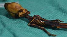Kein außerirdisches Wesen: Forscher lösen Rätsel um Mini-Mumie
