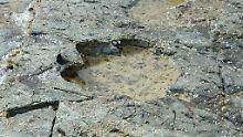 Fundsache, Nr. 1372: Dinosaurier-Fußabdrücke in Schottland