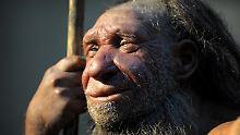 Die Nachbildung eines älteren Neandertalers steht im Neanderthal-Museum von Mettmann (NRW).