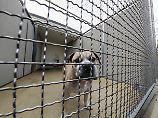 Hundeattacke mit Toten: Versäumnisse können für Amt Folgen haben