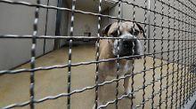 Der Präsident des Deutschen Tierschutzbundes fordert Konsequenzen aus den Fehlern der Behörden im Fall Chico.