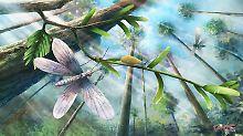 Vorfahren der Schmetterlinge: Insekten schon vor 200 Millionen Jahren bunt