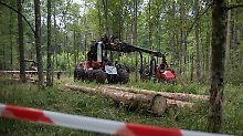 Verstoß gegen EU-Recht: Abholzung von polnischem Urwald ist illegal