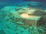 Massenhaft abgestorben: Hitze zerstört Teile des Great Barrier Reefs