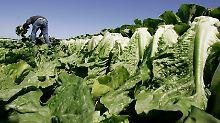 Gefährliche Bakterien: Fünf Menschen sterben durch Salat-Verzehr