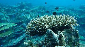 Zur Rettung der Korallen: Hawaii verbietet ab 2021 Verkauf vieler Sonnencremes